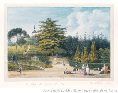 Jean-Baptiste Hilair, Le cèdre du Jardin du Roi (1794). Bibliothèque nationale de France